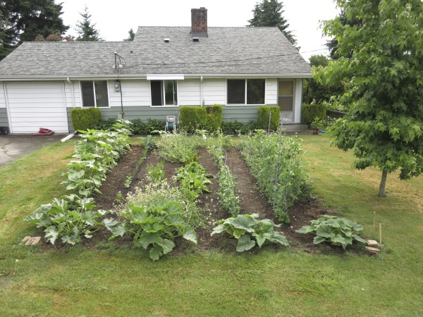 Garden that feeds a growing family in the front yard