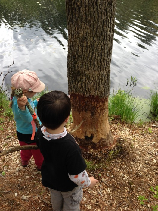 two kids observing a tree that has had a wide swath of bark removes all around.