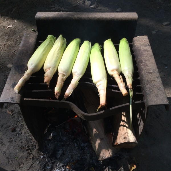 7 ears of corn on campfire