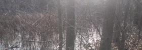 vernal pool in the woods
