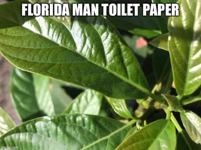 Picture of leaves with text saying Florida Man Toilet Paper
